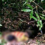 Tá hỏa phát hiện thi thể nam thanh niên trong tư thế nằm sấp trong bụi cây