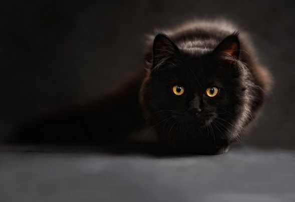 """Giải mã những bí ẩn việc """" mèo nhảy qua làm xác chết sống lại """""""