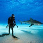 Mơ thấy cá mập nên đánh con mấy chắc ăn